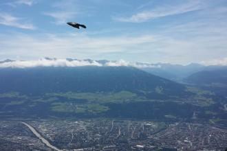 Ein Vogel über Innsbruck, drei an der Hütte.